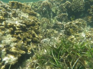 Healthy coral reefs in Kenya