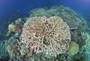 Coral reefs. Great barrier reef.