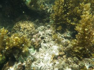 Degraded or poor reefs.